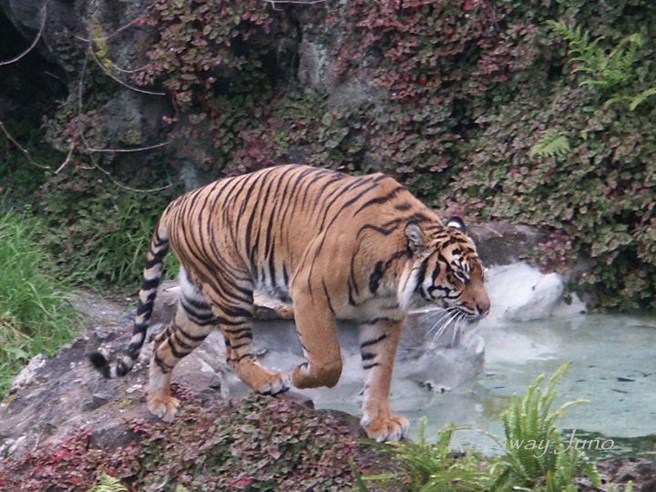 Knebel zoo Sjælland