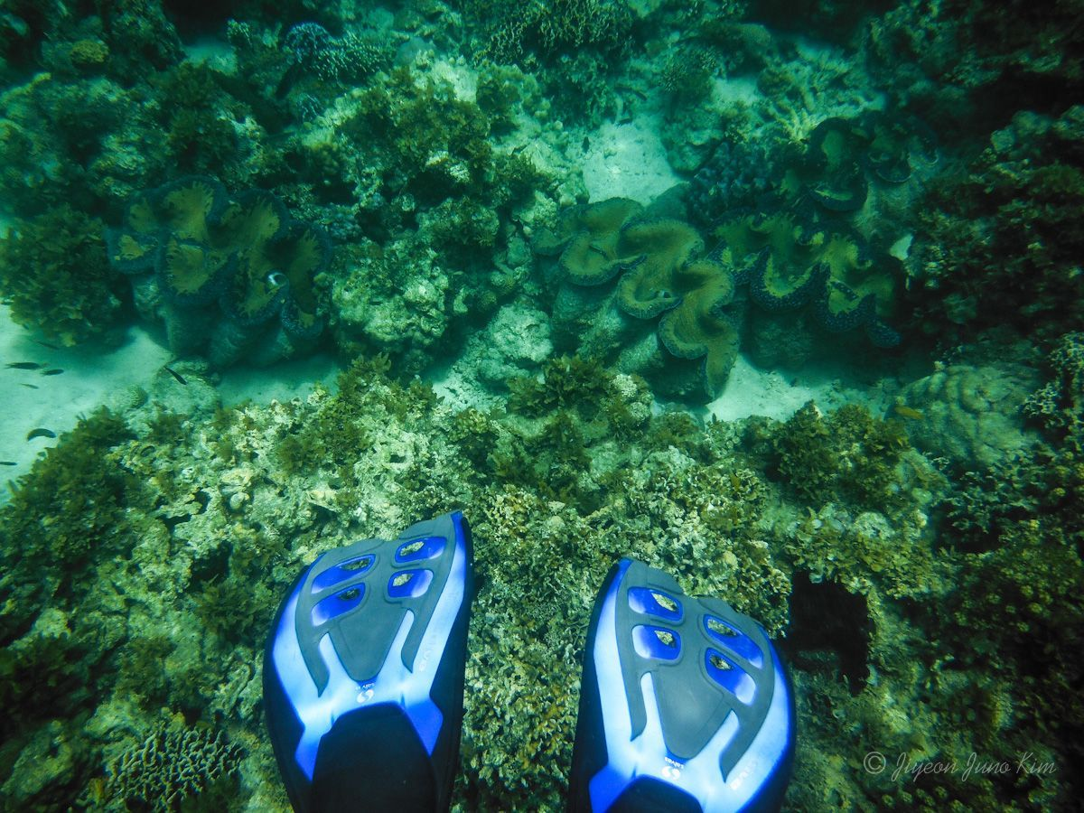 Philippines-NEGROS-Sagay-Giant-Clam-snorkel
