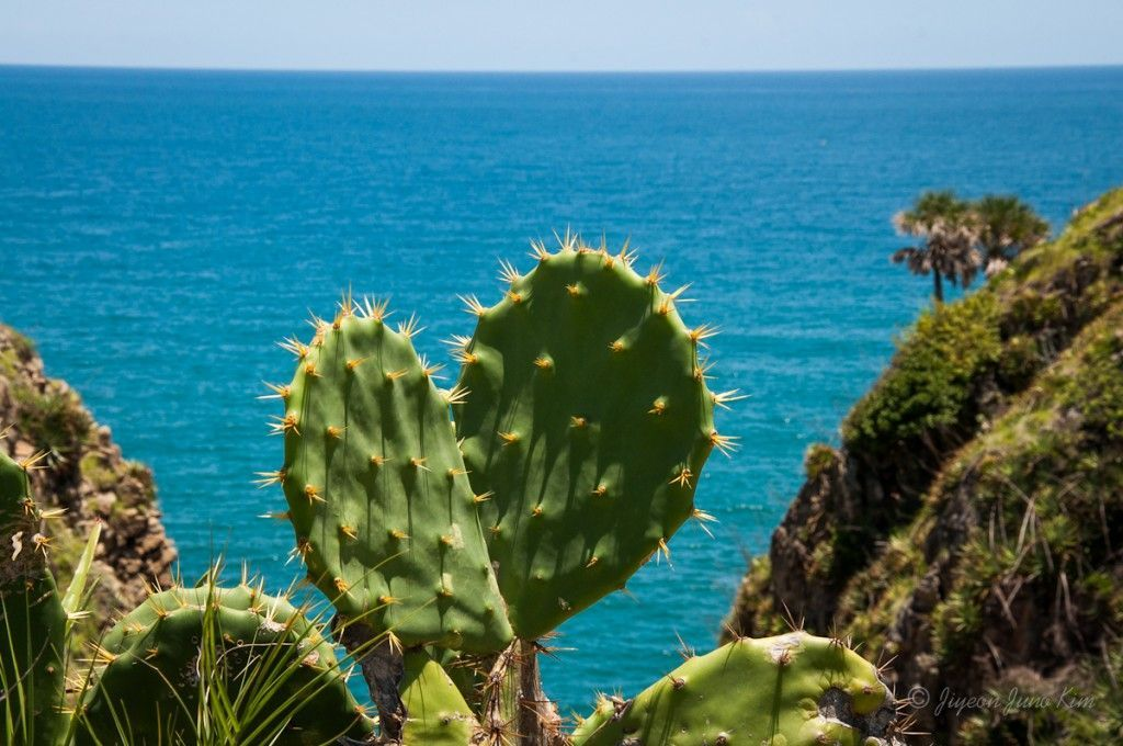 Cactus in Villa Rica hill, Veracruz, Mexico