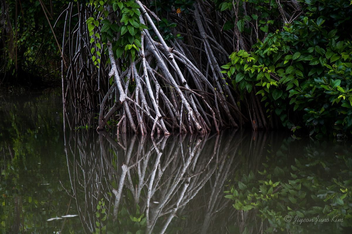 Mangroves of Chiapas Mexico