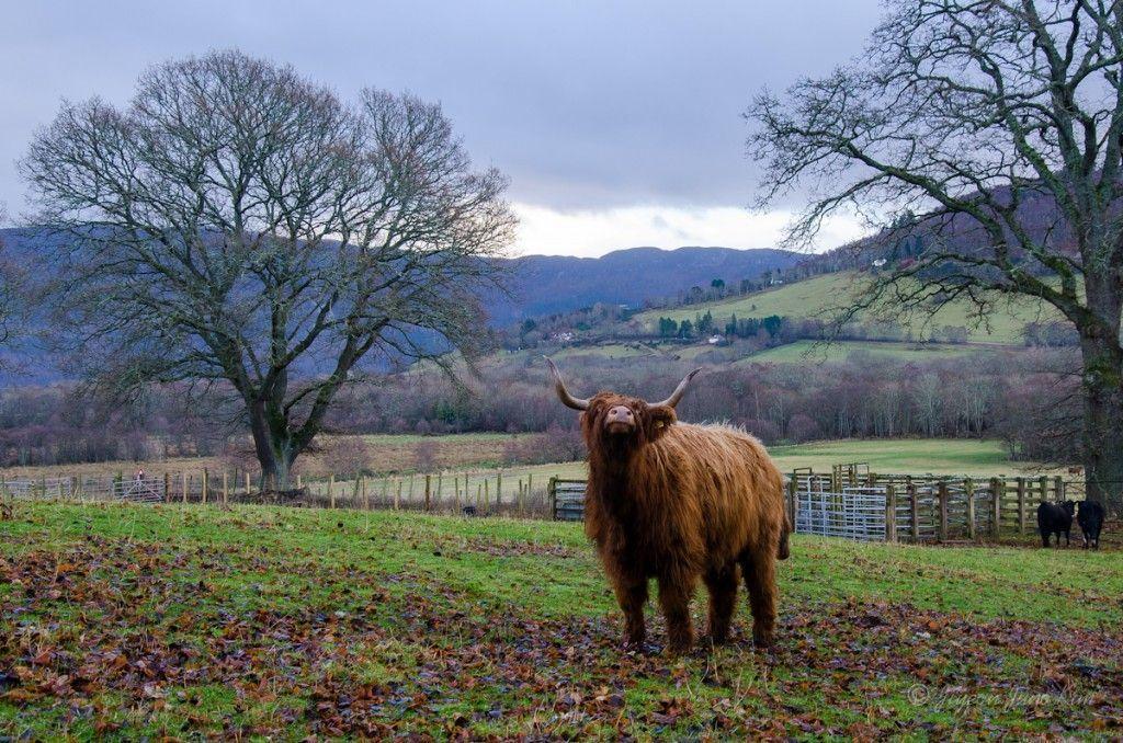 Scotland-Loch-Ness-Highlands