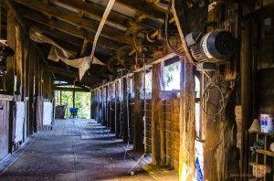 Shearing shed at Charlotte Plains