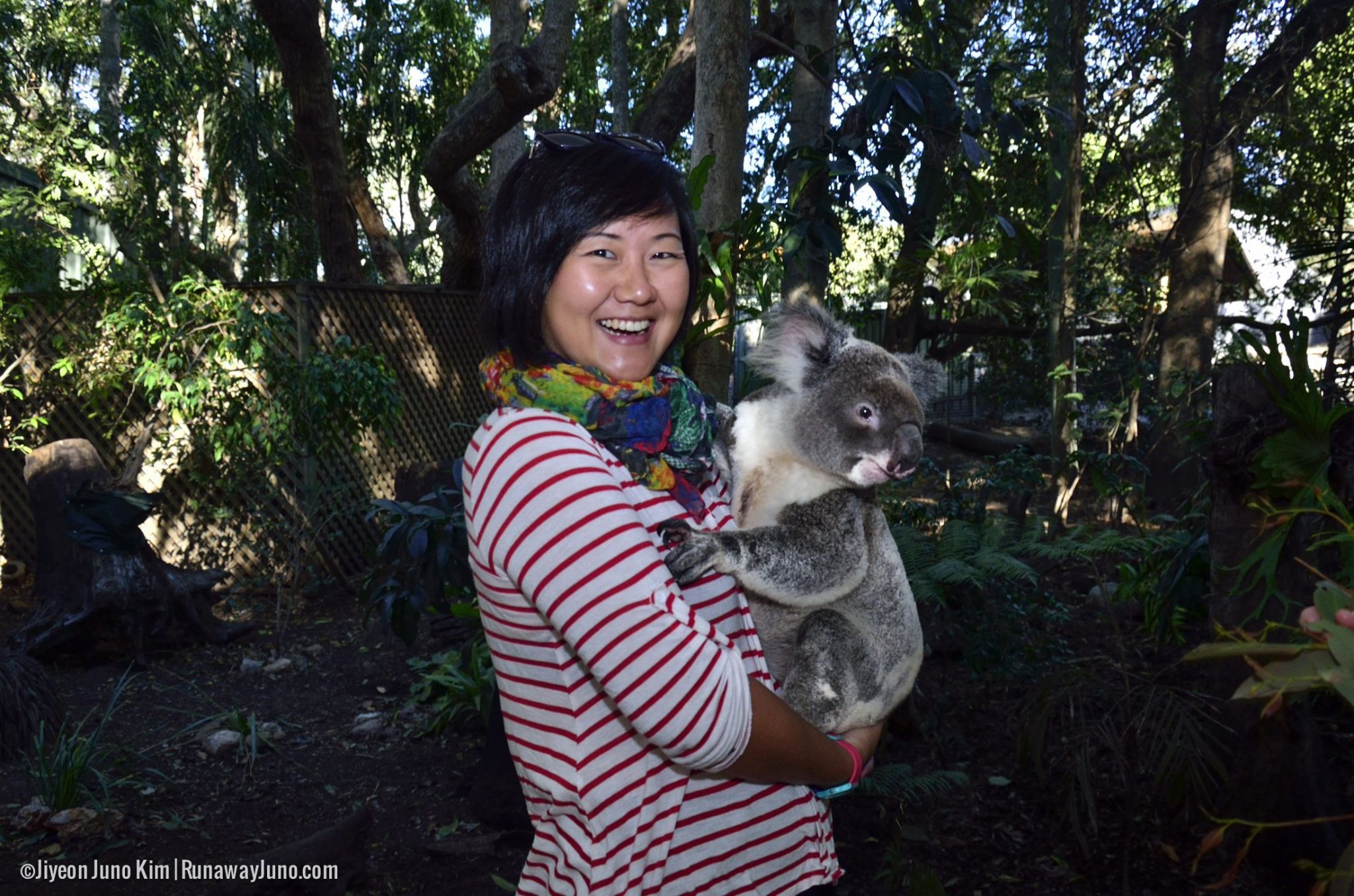 Lone Pine Koala Sanctuary in Brisbane, Australia