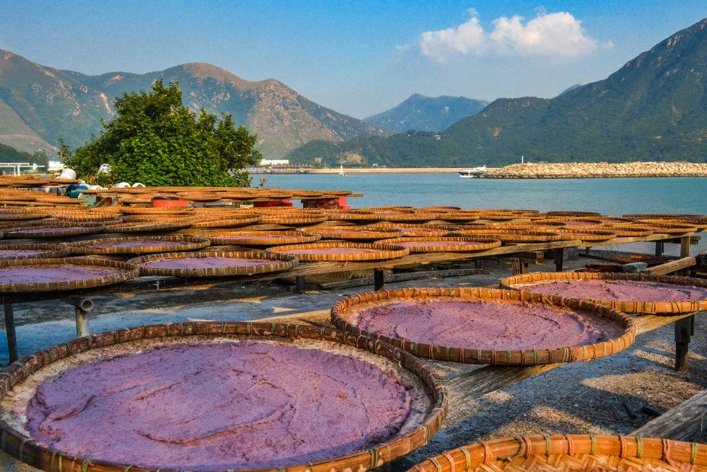 shrimp-paste-drying-in-tai-o